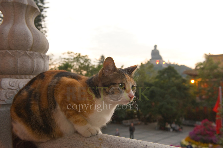 Cat in Hong Kong