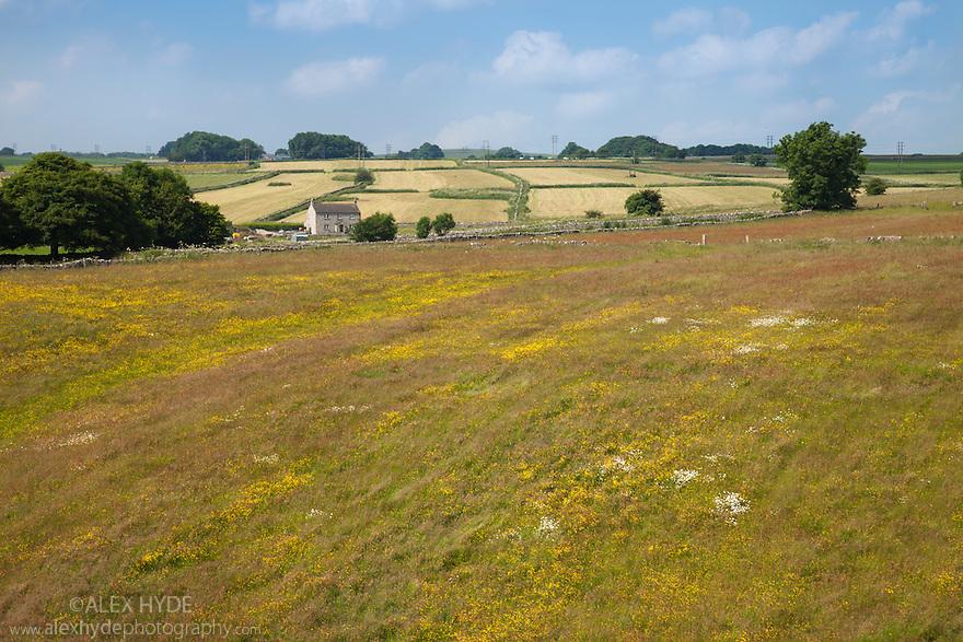 Hay meadows, Peak District National Park, Derbyshire, UK. July.