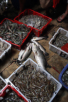 Freshly caught seafood in a market in the port area of Jakarta.<br /> <br /> To license this image, please contact the National Geographic Creative Collection:<br /> <br /> Image ID: 1588020 <br />  <br /> Email: natgeocreative@ngs.org<br /> <br /> Telephone: 202 857 7537 / Toll Free 800 434 2244<br /> <br /> National Geographic Creative<br /> 1145 17th St NW, Washington DC 20036