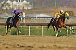 Rapid Redux (Yellow Blinkers)  ridden by J D Acosta wins number 19 of the year tying  a mark set by the great Citation in 1948. This Rapid Redux's 20 Straight win. Laurel Park in Laurel, MD  on 12/13/11. (Ryan Lasek / Eclipse Sportwire)