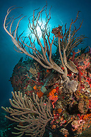 Reef Scenic<br /> Virgin Islands