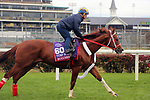 October 30, 2018 : Bucchero at Churchill Downs on October 30, 2018  in Louisville, Kentucky in preparation for the Breeders' Cup Turf Sprint. Mary M. Meek/ESW/CSM