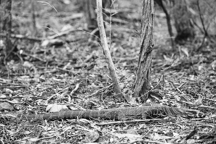 Image Ref: CA1210<br /> Location: Mitchell River National Park, Victoria<br /> Date of Shot: 04.12.20
