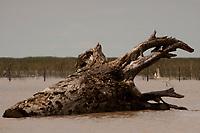 Com a força das águas, aliada ao fenômeno da Pororoca na foz do Amazonas, toras de madeira são jogadas na beira da vila Limão. A região das ilhas Cavianas, onde fica a vila,  é um dos últimos pedaços de terra no rio Amazonas em seu encontro com o  Atlântico.<br /> Marajó, Chaves, ilhas Caviana, Pará, Brasil.<br /> 17/06/2011<br /> Foto Paulo Santos