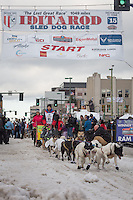 Wade Marrs and team leave the ceremonial start line with an Iditarider at 4th Avenue and D street in downtown Anchorage, Alaska during the 2015 Iditarod race. Photo by Jim Kohl/IditarodPhotos.com