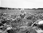 A woman clown in a field of Sunflowers holding a baby