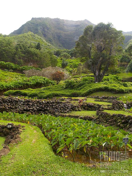 Limahuli Gardens on the North Shore of Kaua'i recreates traditional Polynesian taro farming beds.