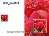 Alfredo, FLOWERS, BLUMEN, FLORES,  photos+++++,BRTOXX02726,#F#
