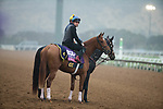 DEL MAR, CA - OCTOBER 31: Best Performance, owned by West Point Thoroughbreds, Inc., Tango Uniform Racing & Robert Masiello and trained by Christophe Clement, waits on the track during morning workouts at Del Mar Thoroughbred Club on October 31, 2017 in Del Mar, California. (Photo by Jon Durr/Eclipse Sportswire/Breeders Cup)