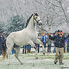 Despite The Odds at Heritage Stallions Open House on 1/17/15