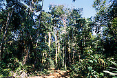 Osa Peninsula, Costa Rica. Corcovado National Park; trail through the rainforest.