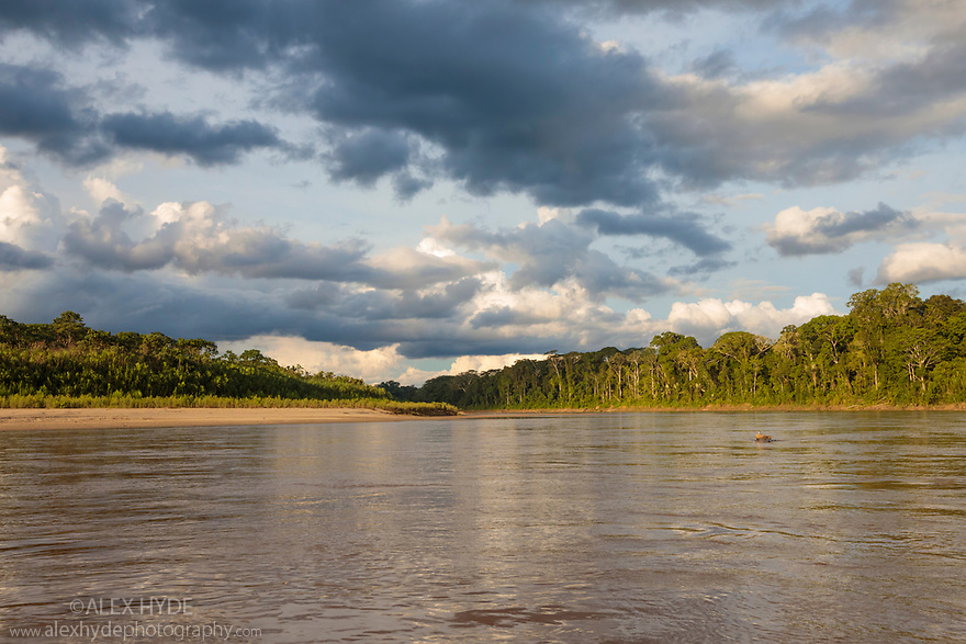 Lowland rainforest along the banks of the Manu River, Manu Biosphere Reserve, Amazonia, Peru.