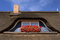 AJ2183, thatched roof, window box, North Germany, Europe, A house with a Friesland style thatched roof with a chimney and beautiful orange and red flowers in a window box displayed in front of a window.
