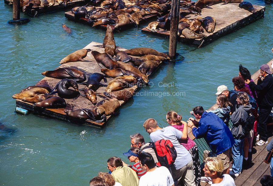 San Francisco, California, USA. Spectators Viewing Sea Lions at Pier 39.