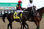 September 14, 2019 : Rowdy Yates (#4, Tyler Baze) in the post parade of the Iroquois Stakes at Churchill Downs, Louisville, Kentucky. He finished fifth.  Trainer Steven M. Asmussen, owner L and N Racing LLC (Lee Levinson). By Morning Line x Spring Station (Yes It's True).  Mary M. Meek/ESW/CSM
