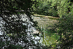 The Silent Pool. Near Shere Surrey. Uk.