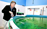 WATERBURY CT. - 18 December 2020-121820SV05-Eric Pederson, President and CEO, checks on swimming fish at Ideal Fish in Waterbury Friday. Ideal Fish is a big aquaculture business that moved into an industrial space in the city's East End a year or two ago.<br /> Steven Valenti Republican-American