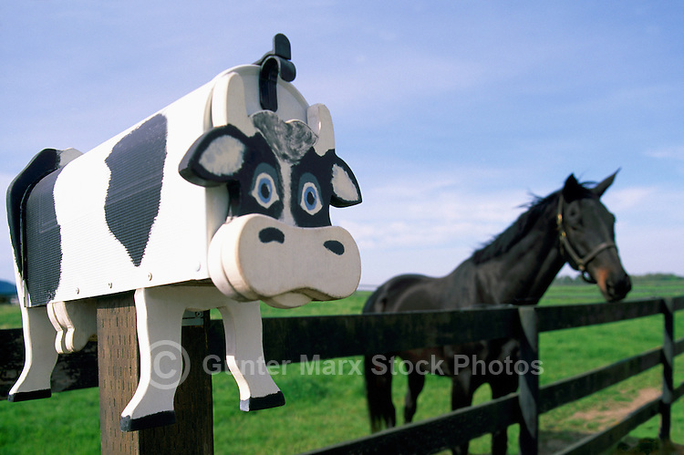 Artistic Folk Art Cow Mailbox and Black Horse in Pasture, Fraser Valley, Southwestern BC, British Columbia, Canada