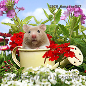 Xavier, ANIMALS, REALISTISCHE TIERE, ANIMALES REALISTICOS, photos+++++,SPCHHAMSTER207,#A#, EVERYDAY ,funny