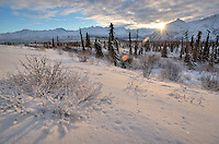 Boreal Forest, mid winter, Alaska.