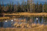 Small tundra pond near Delta Junction, Alaska.