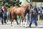May 20, 2014: California Chrome with assistant trainer Alan Sherman arrives at Belmont. Also arr8ving 2nd plac reakness finisher Ride on Curlin Sue Kawczynski/ESW/CSM