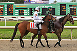 January 16, 2016: Masquerade with Florent Geroux up in the Marie G. Krantz Memorial Stakes race at the Fairground race course in New Orleans Louisiana. Steve Dalmado/ESW/CSM