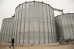 Darrel Gingerich, president and operations manager of Gingerich Farms in Lovington, Ill., shown with the company's stored grain. The white grain bags and metal bins allow the family company to wait and sell corn when the price is higher. <br /> Kristen Schmid for the Wall Street Journal<br /> CORN