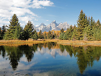 Fall Color in Tetons, Jackson, Wyoming