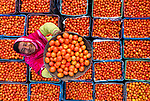 Tomato seller sorts his stock by Ahsanul Haque Nayem