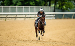 June 4, 2021:  Masterpiece gallops at Belmont Park in Elmont, New York on June 4, 2021. Evers/Eclipse Sportswire/CSM