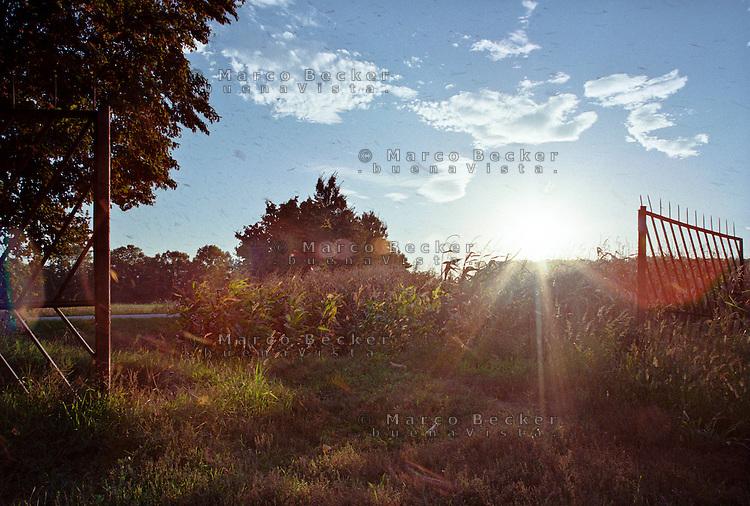 Cusago (Milano), Parco Agricolo Sud. Un vecchio cancello e un campo di granoturco al tramonto --- Cusago (Milan), Rural Park South. An old gate and a corn field at sunset