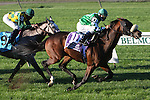 10 02 2010: Winchester & Cornelio Velasquez hold off Paddy O'Prado in the Joe Hirsh Turf Classic, at 1 1/2 miles on the turf for 3-year olds & up, Belmont Park, Elmont, NY. Trainer Christopher Clement.  Owners Bert & Diane Firestone