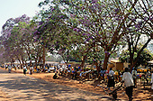 Kasama, Zambia, Africa. Market day, with stalls under flowering trees.