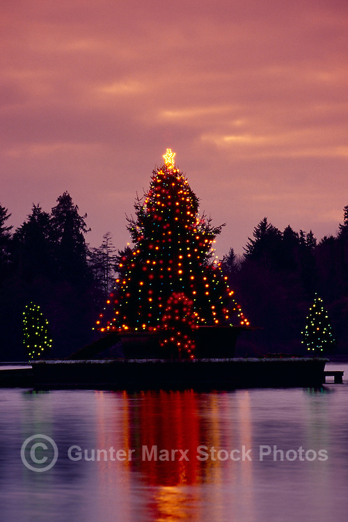 """Christmas Tree Lights reflecting on """"Lost Lagoon"""" Ice at Dusk, Stanley Park, Vancouver, BC, British Columbia, Canada"""