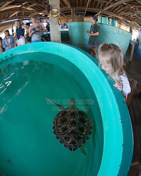 Girl watching sea turtles, Seaturtle inc., South Padre Island, Texas