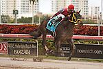 Off the Jak with Jose Alvarez up wins the Florida Sunshine Millions Sprint at Gulfstream Park.  Hallandale Beach Florida. 01-19-2013