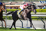 ARCADIA, CA - OCTOBER 01: Avenge #4, ridden by Flavien Prat win the Rodeo Drive Stakes at Santa Anita Park on October 01, 2016 in Arcadia, California. (Photo by Zoe Metz/Eclipse Sportswire/Getty Images)