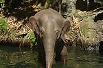MECHANICAL ELEPHANT AT DISNEYS JUNGLE CRUISE RIDE