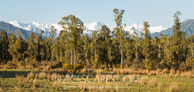 Morning on farmland in Whataroa with Butler Ranges of Southern Alps in background, West Coast, South Westland, New Zealand, NZ