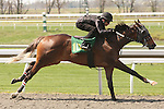 07 April 2011.  Hip #103 Corinthian - Berry Blessed colt, consigned by Murray Smith.