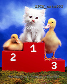Xavier, ANIMALS, REALISTISCHE TIERE, ANIMALES REALISTICOS, cats, photos+++++,SPCHCATS903,#a#, EVERYDAY