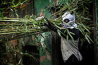 A researchers carries bamboo to feed to wild pandas at the Hetaoping Panda Conservation Centre. The researchers wear the panda costumes to prevent the wild pandas from becoming accustomed to humans.