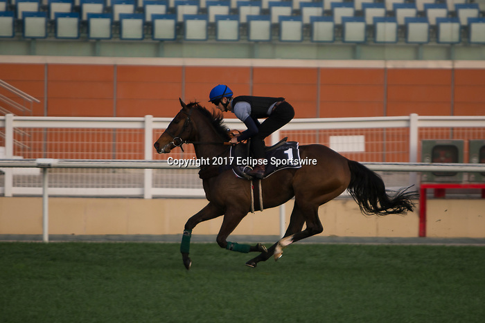 DUBAI,UNITED ARAB EMIRATES-MARCH 23: Limato,trained by Henry Candy,exercises in preparation for the  at Meydan Racecourse on March 23,2017 in Dubai,United Arab Emirates (Photo by Kaz Ishida/Eclipse Sportswire/Getty Images)