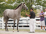 11 September 2010.  Hip #76  Unbridled's Song - My Friend C.Z. filly, consigned by Gainesway.