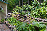 Shade garden stone wall, flowers, plants, shady plants, house, sloped hillside in tiers, bold foliage