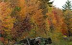 Autumn displays it colors.  (DOUG WOJCIK MEDIA)
