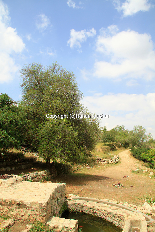 Israel, Ein Khod in Jerusalem mountains