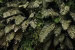 Palm fronds, Tabin Wildlife Reserve, Sabah, Borneo, Malaysia