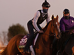United, trained by trainer Richard E. Mandella, exercises in preparation for the Breeders' Cup Turf at Keeneland Racetrack in Lexington, Kentucky on November 3, 2020.